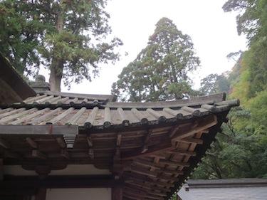 murooji_7.JPG