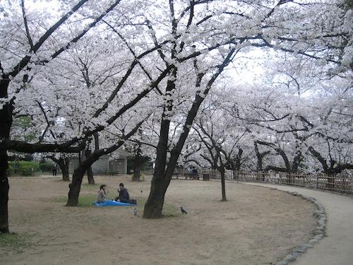 sakura_0408.JPG