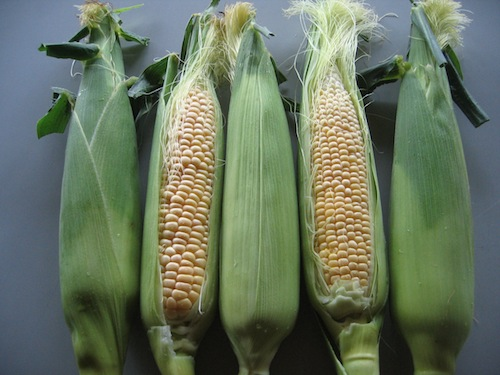 corn_0622_2.JPG
