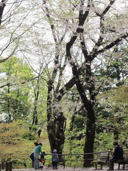 hanami_0401_7.jpg