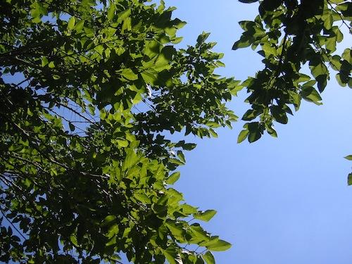 hidaka_0821_1.JPG