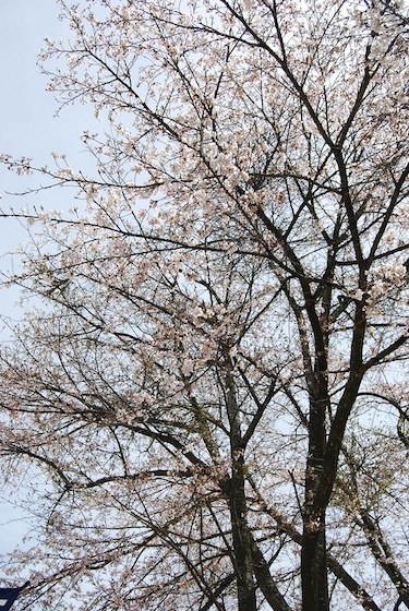 kobuchi_0421_1.JPG