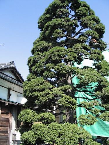 yutenji_1006_1.jpg